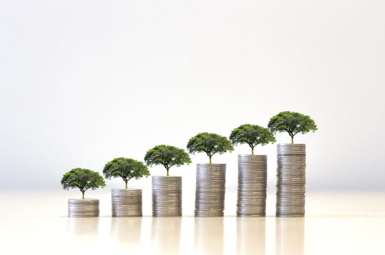 Photo of six stacks of coins on which green trees grow