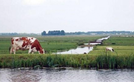 Photo cow in typically Dutch landscape