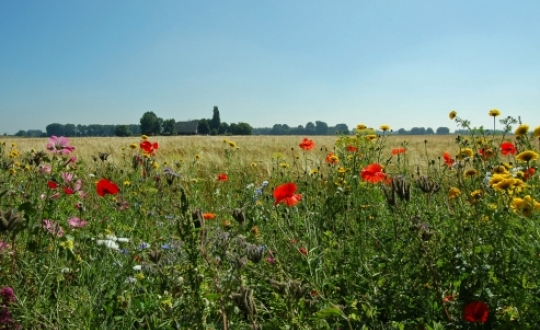 'flower-rich field margins enhance biodiversity' - Photo: Lilian Pruissen
